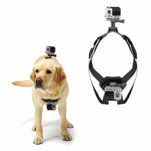 GoPro Hunde Halterung