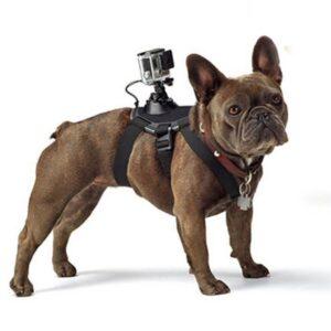 GoPro Hunde Halterung für kleine Hunde